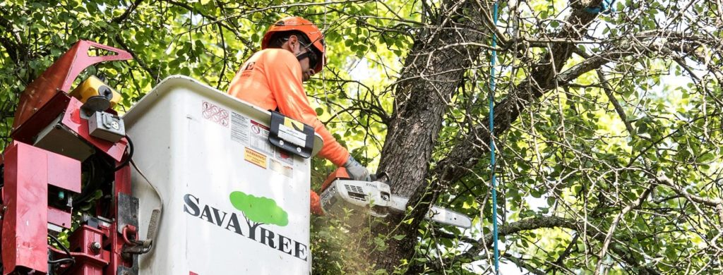 Arborist-Consultations-Norfolk Tree Trimming and Stump Grinding Services-We Offer Tree Trimming Services, Tree Removal, Tree Pruning, Tree Cutting, Residential and Commercial Tree Trimming Services, Storm Damage, Emergency Tree Removal, Land Clearing, Tree Companies, Tree Care Service, Stump Grinding, and we're the Best Tree Trimming Company Near You Guaranteed!