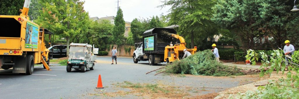 Commercial-Tree-Services-Norfolk Tree Trimming and Stump Grinding Services-We Offer Tree Trimming Services, Tree Removal, Tree Pruning, Tree Cutting, Residential and Commercial Tree Trimming Services, Storm Damage, Emergency Tree Removal, Land Clearing, Tree Companies, Tree Care Service, Stump Grinding, and we're the Best Tree Trimming Company Near You Guaranteed!