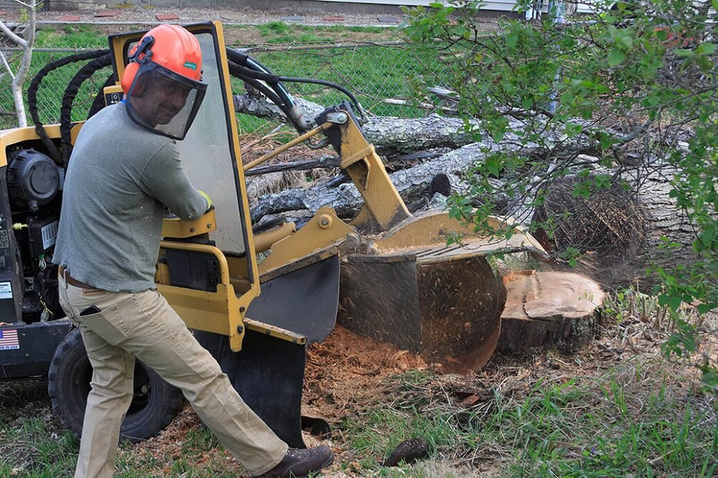 Contact Us-Norfolk Tree Trimming and Stump Grinding Services-We Offer Tree Trimming Services, Tree Removal, Tree Pruning, Tree Cutting, Residential and Commercial Tree Trimming Services, Storm Damage, Emergency Tree Removal, Land Clearing, Tree Companies, Tree Care Service, Stump Grinding, and we're the Best Tree Trimming Company Near You Guaranteed!