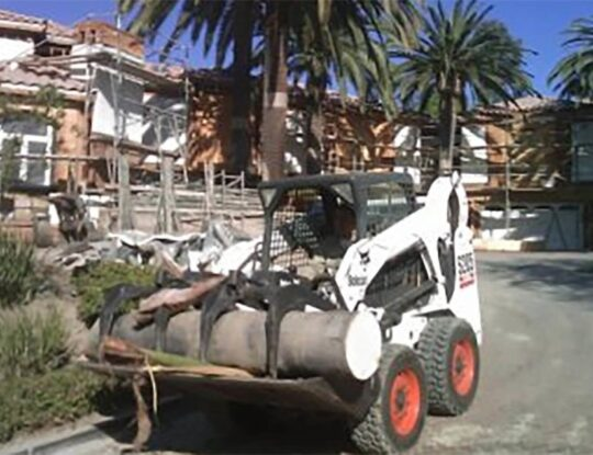 Palm-Tree-Removal-Norfolk Tree Trimming and Stump Grinding Services-We Offer Tree Trimming Services, Tree Removal, Tree Pruning, Tree Cutting, Residential and Commercial Tree Trimming Services, Storm Damage, Emergency Tree Removal, Land Clearing, Tree Companies, Tree Care Service, Stump Grinding, and we're the Best Tree Trimming Company Near You Guaranteed!
