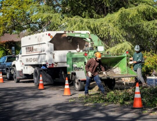 Residential-Tree-Services-Norfolk Tree Trimming and Stump Grinding Services-We Offer Tree Trimming Services, Tree Removal, Tree Pruning, Tree Cutting, Residential and Commercial Tree Trimming Services, Storm Damage, Emergency Tree Removal, Land Clearing, Tree Companies, Tree Care Service, Stump Grinding, and we're the Best Tree Trimming Company Near You Guaranteed!