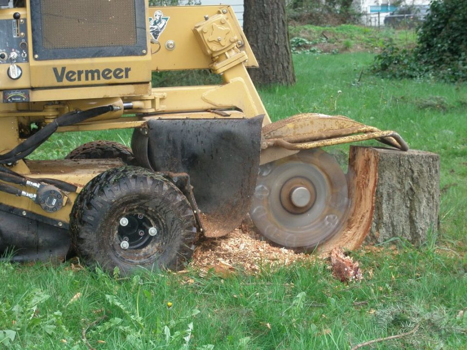 Stump-Grinding-Norfolk Tree Trimming and Stump Grinding Services-We Offer Tree Trimming Services, Tree Removal, Tree Pruning, Tree Cutting, Residential and Commercial Tree Trimming Services, Storm Damage, Emergency Tree Removal, Land Clearing, Tree Companies, Tree Care Service, Stump Grinding, and we're the Best Tree Trimming Company Near You Guaranteed!