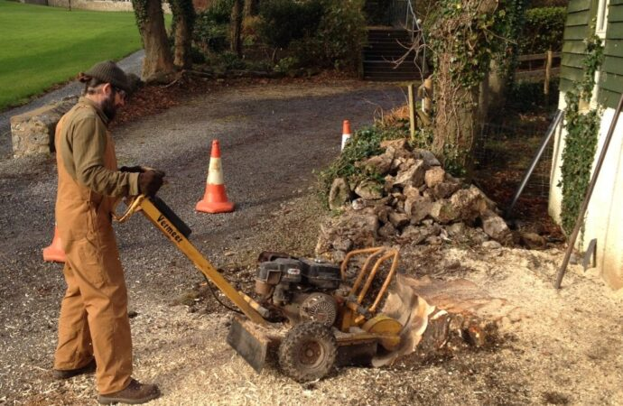 Stump-Removal-Norfolk Tree Trimming and Stump Grinding Services-We Offer Tree Trimming Services, Tree Removal, Tree Pruning, Tree Cutting, Residential and Commercial Tree Trimming Services, Storm Damage, Emergency Tree Removal, Land Clearing, Tree Companies, Tree Care Service, Stump Grinding, and we're the Best Tree Trimming Company Near You Guaranteed!