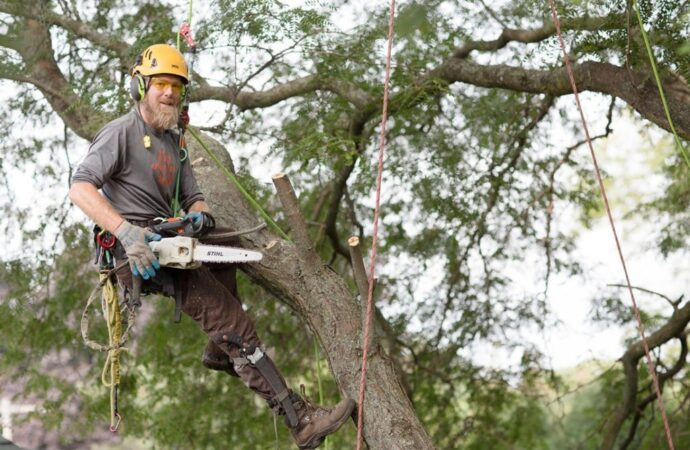 Tree-Cutting-Norfolk Tree Trimming and Stump Grinding Services-We Offer Tree Trimming Services, Tree Removal, Tree Pruning, Tree Cutting, Residential and Commercial Tree Trimming Services, Storm Damage, Emergency Tree Removal, Land Clearing, Tree Companies, Tree Care Service, Stump Grinding, and we're the Best Tree Trimming Company Near You Guaranteed!