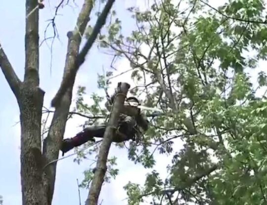 Tree-Removal-Norfolk Tree Trimming and Stump Grinding Services-We Offer Tree Trimming Services, Tree Removal, Tree Pruning, Tree Cutting, Residential and Commercial Tree Trimming Services, Storm Damage, Emergency Tree Removal, Land Clearing, Tree Companies, Tree Care Service, Stump Grinding, and we're the Best Tree Trimming Company Near You Guaranteed!