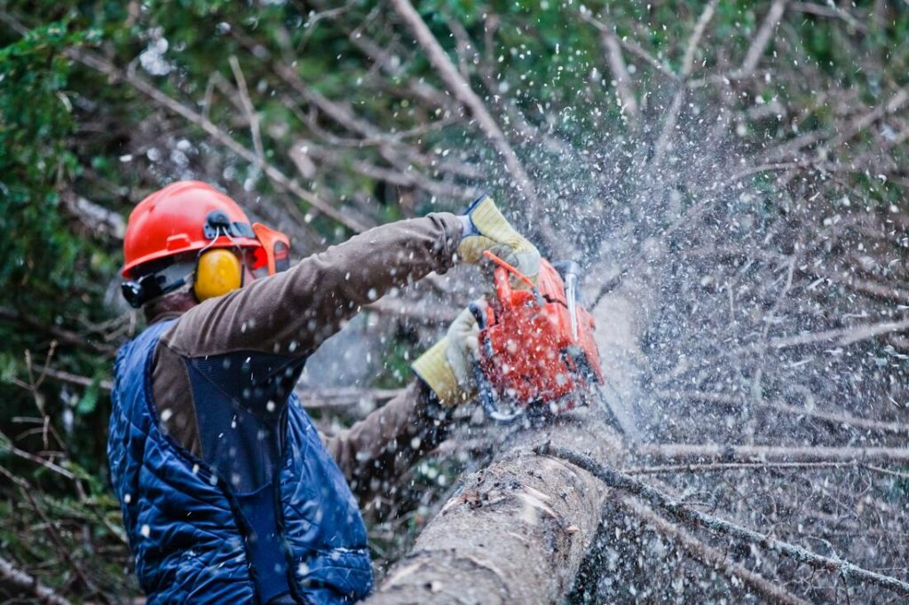 Chesapeake-Norfolk Tree Trimming and Stump Grinding Services-We Offer Tree Trimming Services, Tree Removal, Tree Pruning, Tree Cutting, Residential and Commercial Tree Trimming Services, Storm Damage, Emergency Tree Removal, Land Clearing, Tree Companies, Tree Care Service, Stump Grinding, and we're the Best Tree Trimming Company Near You Guaranteed!