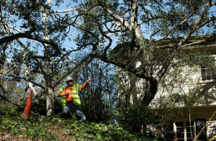 Hampton-Norfolk Tree Trimming and Stump Grinding Services-We Offer Tree Trimming Services, Tree Removal, Tree Pruning, Tree Cutting, Residential and Commercial Tree Trimming Services, Storm Damage, Emergency Tree Removal, Land Clearing, Tree Companies, Tree Care Service, Stump Grinding, and we're the Best Tree Trimming Company Near You Guaranteed!