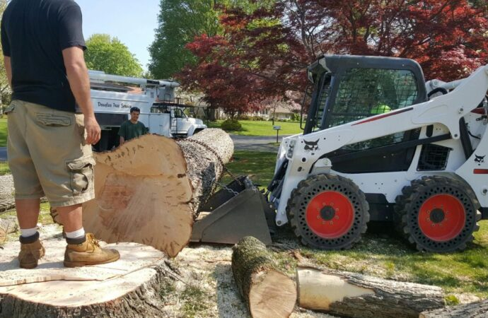 Portsmouth-Norfolk Tree Trimming and Stump Grinding Services-We Offer Tree Trimming Services, Tree Removal, Tree Pruning, Tree Cutting, Residential and Commercial Tree Trimming Services, Storm Damage, Emergency Tree Removal, Land Clearing, Tree Companies, Tree Care Service, Stump Grinding, and we're the Best Tree Trimming Company Near You Guaranteed!